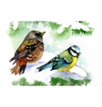 Watercolor forest birds on snowy fir tree branch vector image