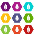 hornbeam leaf icon set color hexahedron vector image vector image