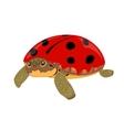 Turtle aka ladybug vector image