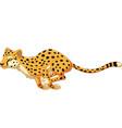 cartoon cheetah running vector image vector image