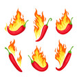 chili on fire cartoon hot red peppers with flames vector image