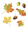 set of autumn objects acorns and leaves isolated vector image