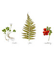 wild plants hand drawn in color oxalis fern and vector image vector image