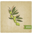 olive eco background vector image