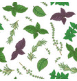seamless pattern with fresh green herbs vector image
