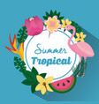 summer tropical beautiful flamengo exotic plants vector image vector image