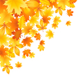 Beautifu l autumn leaves vector image vector image
