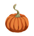 big orange pumpkin isolated on white background vector image