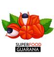 guarana icon vector image vector image
