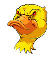 mascot head an duck vector image vector image