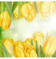 Tulips on a blurred background EPS 10 vector image vector image