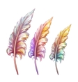 feather in three colors vector image