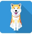 dog Akita Inu Japanese breed icon flat design vector image vector image