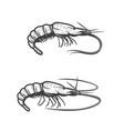 shrimp underwater animal ocean fishing vector image vector image