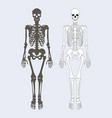 skeleton human body set vector image vector image