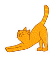 stretching cat vector image vector image