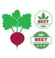 Beet vector image vector image