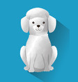 cute french poodle dog vector image