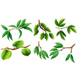 Different type of leaves on branch vector image vector image