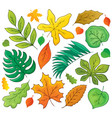 leaves theme collection 1 vector image