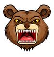 mascot head an bear vector image vector image