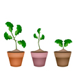 Three Fresh Limes in Ceramic Flower Pots vector image vector image