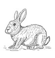 rabbit isolated on white background design vector image
