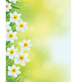 daffodil flowers frame vector image vector image