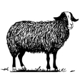 farm sheep vector image