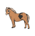 pony small horse color engraving vector image vector image