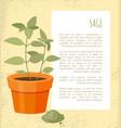 sage banner of plant in pot vector image vector image