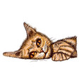 lying cat solated on white relax cat vector image vector image