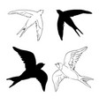 swallow logo isolated swallow on white background vector image vector image