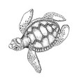 turtle engraving style vector image vector image