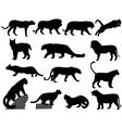 wildcats vector image vector image