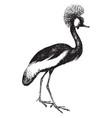 crowned crane vintage vector image vector image