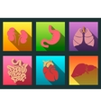 Internal human organs flat long shadow icons set vector image