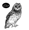 owl hand drawn graphics vector image vector image