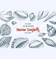 seashells background or mollusca different forms vector image