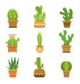 decorative cactus in pots set desert vector image