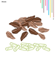 Dried Cardamom Bulbs with Vitamin and Minerals vector image vector image