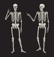 human skeletons posing isolated over black vector image vector image