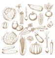 Organically healthy vegetables retro sketches vector image vector image