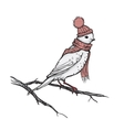 Retro Of The Bird On Branch vector image