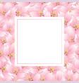 sakura cherry blossom banner card vector image vector image