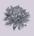 blue pastel colored chrysanthemum vector image