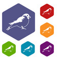 bullfinch icons set vector image