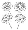 hand drawn monochrome rose flowers vector image vector image