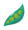 peas vegetable fresh cartoon isolated icon white vector image