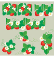 strawberry line seamless 380 vector image vector image